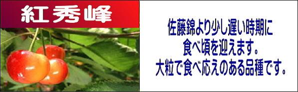 サクランボ狩り,紅秀峰。佐藤錦より遅い時期に食べ頃をむかえます。大粒で食べ応えのある品種です。