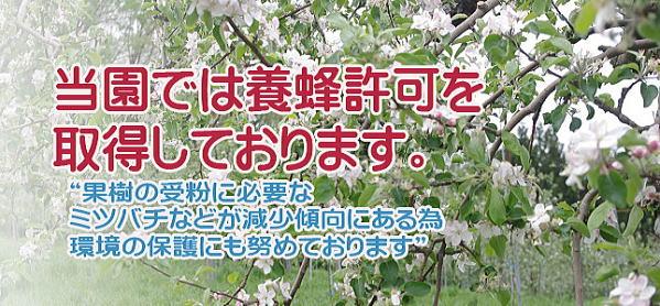 福島りんご。マルハラ果樹園のりんごは自然の力を最大限に生かした栽培方法を実践しております。
