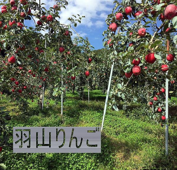 りんご。福島のりんご